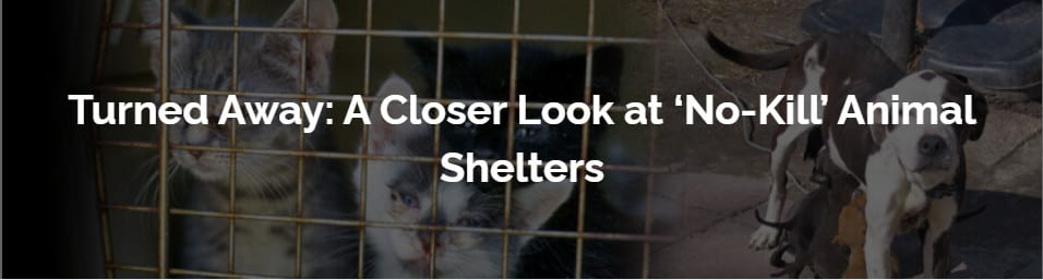 a closer look at no kill animal shelters