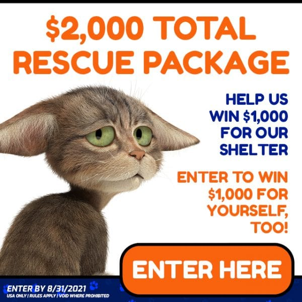 Adopt a Cat Rescue Shelter Package