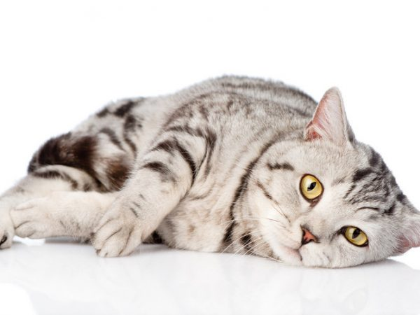 anemia in cats - what causes anemia in cats
