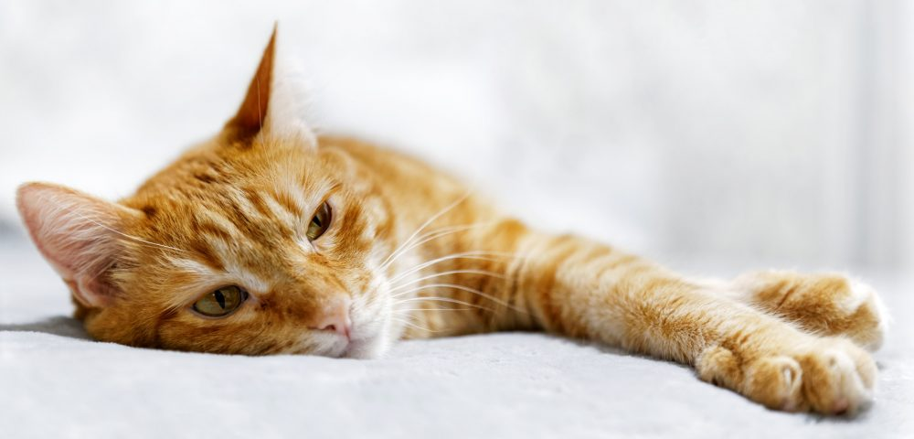 cat anemia - nationwide health insurance