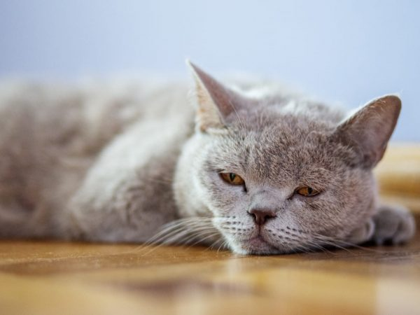 cat cancer treatment