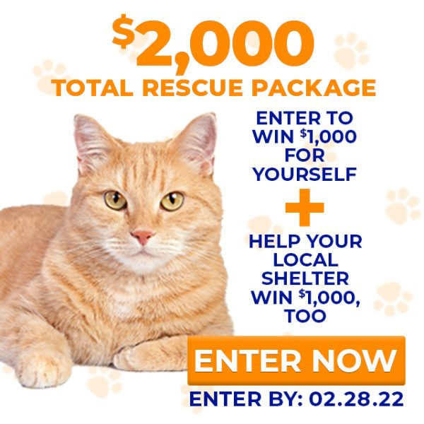 cat rescue charitable donation giveaway