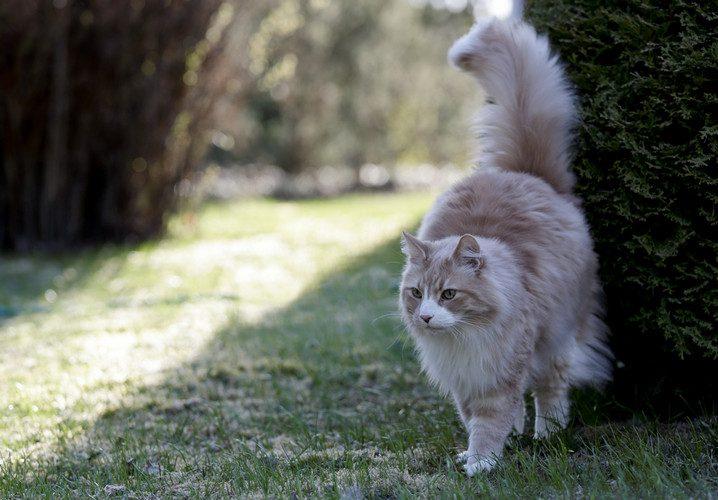 cat spraying - female cat spraying