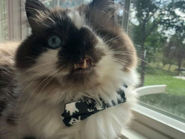 cricket the one eyed cat winner cute cat photo