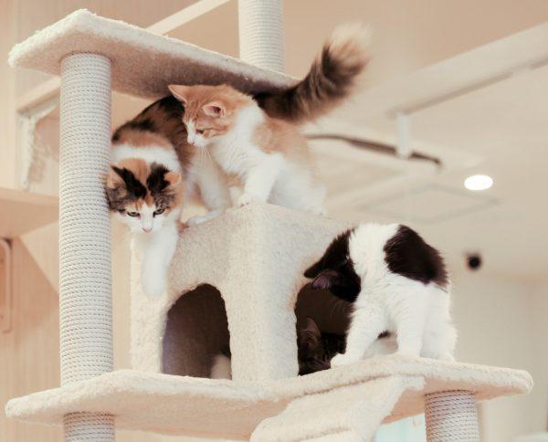 do female cats spray - when do male cats start spraying