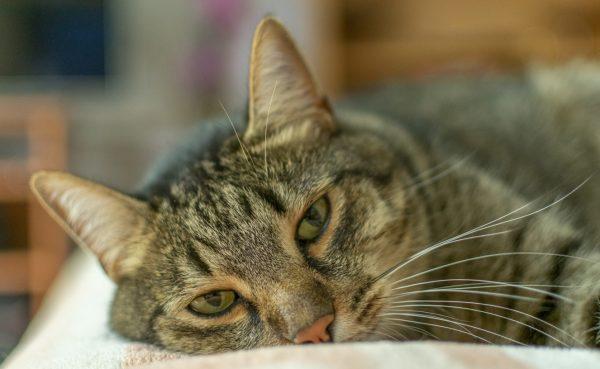 feline leukemia virus - feline leukemia test