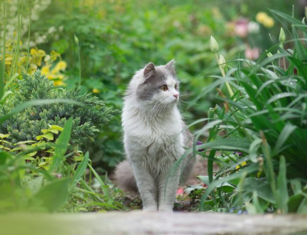 fiv in cats - fiv positive cat
