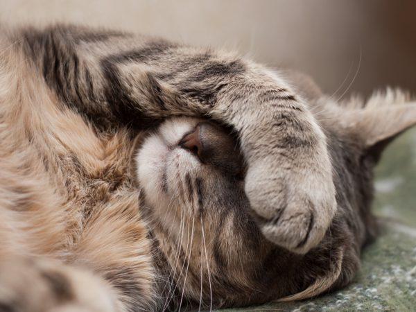 gabapentin cats - gabapentin for cats
