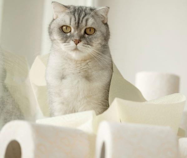 gabapentin for cats - cats with diarrhea