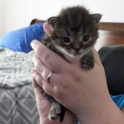 meowwiki cat contest winner aurora june 2020 giveaways