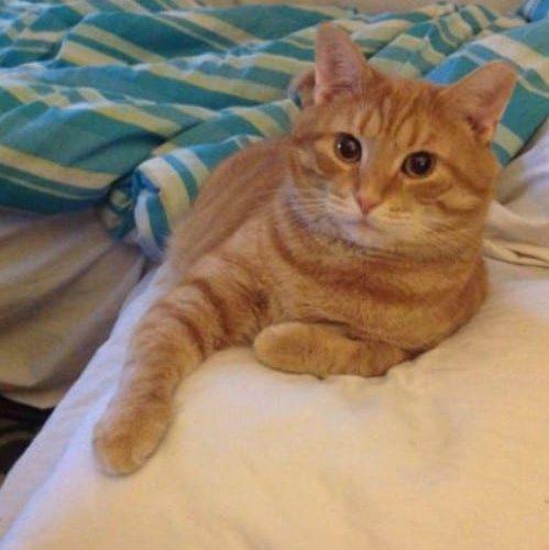 meowwiki cute cat picture winner ginji may 2020