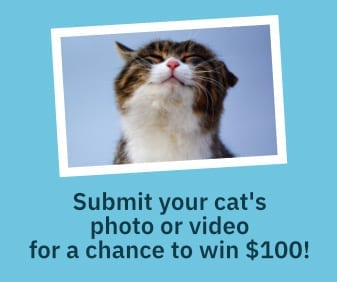 submit-your-cat-photo-video