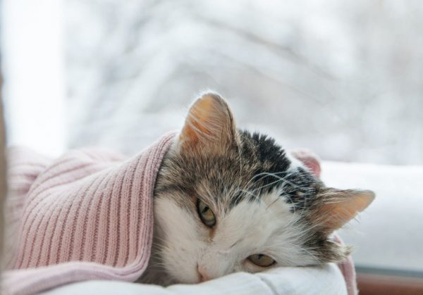 symptoms of cancer in cats