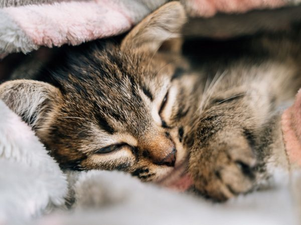 upper respiratory infection in cats - upper respiratory infection cat