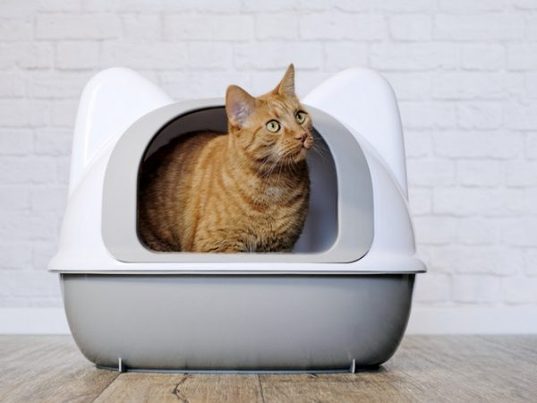 urinary tract infection in cats - urinary tract infection cat